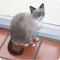Adopt A Pet :: Jeffrey - Naples, FL