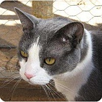 Adopt A Pet :: Grady - Las Cruces, NM