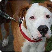 Adopt A Pet :: Milo - Seattle, WA