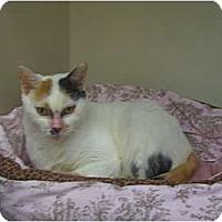Adopt A Pet :: Lovey - Deerfield Beach, FL