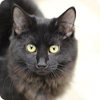 Adopt A Pet :: Lil - Marietta, GA