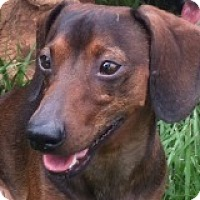 Adopt A Pet :: Tanner Touchdown - Houston, TX