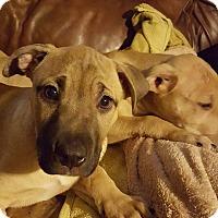 Adopt A Pet :: Don Juan - Broken Arrow, OK