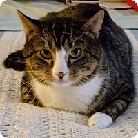 Adopt A Pet :: KUJO - Beverly, MA