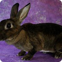 Adopt A Pet :: Hazel - Wilmington, NC
