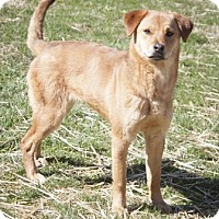 Adopt A Pet :: Apricot - Bedford, IN