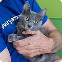 Adopt A Pet :: Janet - Houston, TX