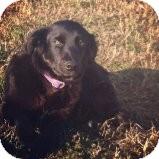 Border Collie Mix Puppy for adoption in Russellville, Kentucky - Aubrey