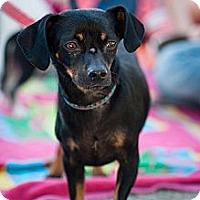 Adopt A Pet :: Eddie - Santa Monica, CA