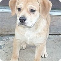 Adopt A Pet :: Miss Butkus - Oak Creek, WI
