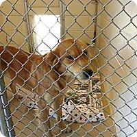 Adopt A Pet :: Shirley - Jacksboro, TN