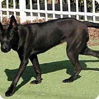 Adopt A Pet :: Destiny - Evergreen Park, IL