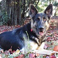 Adopt A Pet :: Fresca - Green Cove Springs, FL