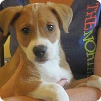 Adopt A Pet :: Emily - Greenville, RI