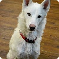 Adopt A Pet :: Sky - Lake Odessa, MI