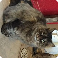 Adopt A Pet :: Daisey Mae - Rochester, NY