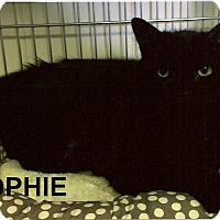 Domestic Longhair Cat for adoption in Medway, Massachusetts - Sophie