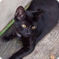 Adopt A Pet :: Priest - Jefferson, NC