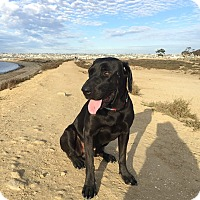 Adopt A Pet :: Dudley - San Diego, CA