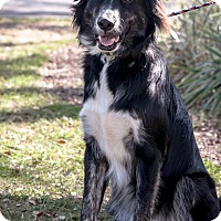 Adopt A Pet :: Brady - Gainesville, FL