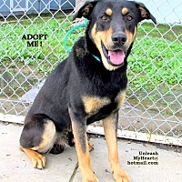 Adopt A Pet :: WoofMan's cuz - Hermosa, CA
