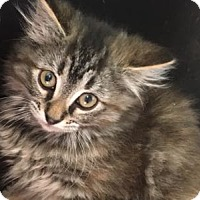 Adopt A Pet :: Miley - Louisville, KY