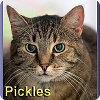 Adopt A Pet :: Pickles - Aldie, VA