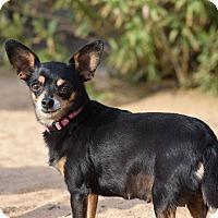 Adopt A Pet :: Rosie - Rosamond, CA