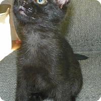 Adopt A Pet :: Trey - Fort Pierce, FL