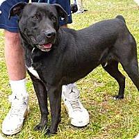 Adopt A Pet :: Bob de Builder - Midlothian, VA