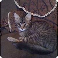 Adopt A Pet :: Felicity - Mobile, AL
