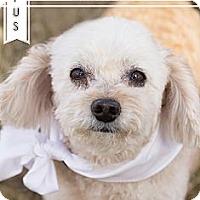 Adopt A Pet :: Rufus - Chandler, AZ