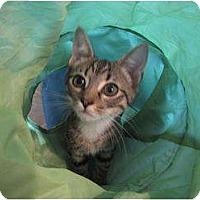 Adopt A Pet :: POE-COURTESY POST - Fairfax, VA
