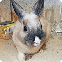 Adopt A Pet :: Slim - North Gower, ON