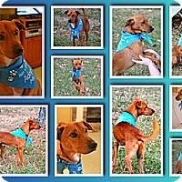 Adopt A Pet :: Jasper - Hagerstown, MD