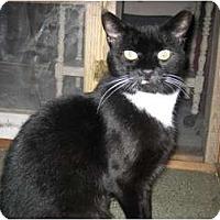 Adopt A Pet :: Stephen - Portland, ME