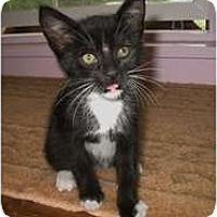 Adopt A Pet :: Raven - Shelton, WA