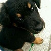 Adopt A Pet :: Jodie Benn - New Boston, NH