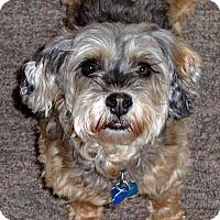 Adopt A Pet :: Tia - Toronto, ON