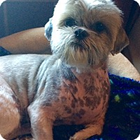 Adopt A Pet :: Roxy - Edmond, OK