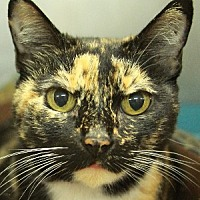 Adopt A Pet :: Kiki - Savannah, MO