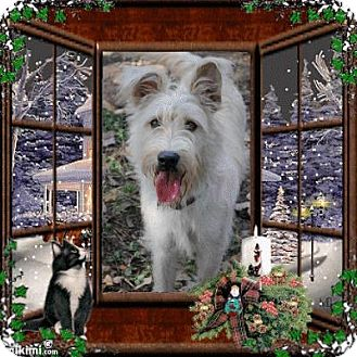 Schnauzer (Standard) Mix Dog for adoption in Crowley, Louisiana - Aidan