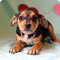 Adopt A Pet :: Jada - Waldorf, MD
