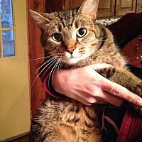 Adopt A Pet :: Dexter - Middletown, OH