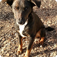 Adopt A Pet :: Chesney - Baltimore, MD