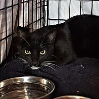Adopt A Pet :: Darwin - Monrovia, CA