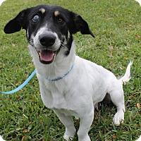 Adopt A Pet :: Lady Bug - New Smyrna Beach, FL