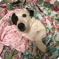 Adopt A Pet :: LuLu - Nashville, TN