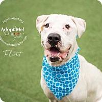 Adopt A Pet :: Flint - Kansas City, MO