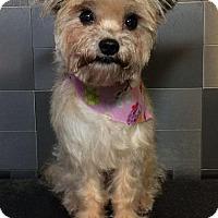 Adopt A Pet :: Imani - McKinney, TX